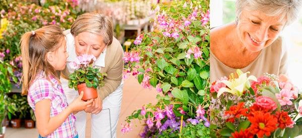 Если бабушка любит растения, подарите ей комнатный цветок в горшке