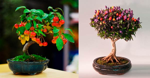 Маленькое плодовое деревце