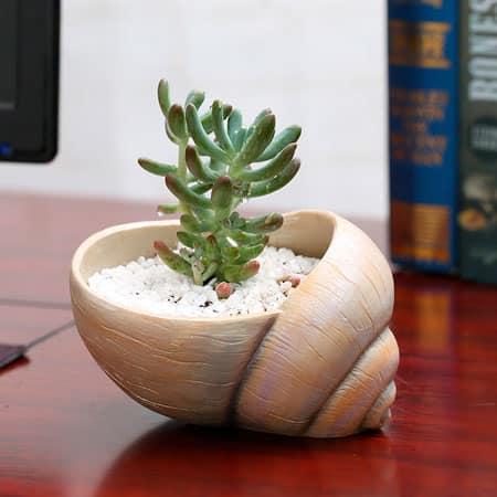 Растение в горшке формы морской раковины