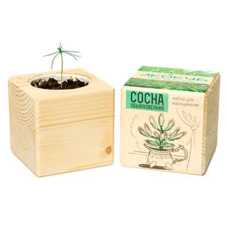 Экологический куб для выращивания растения