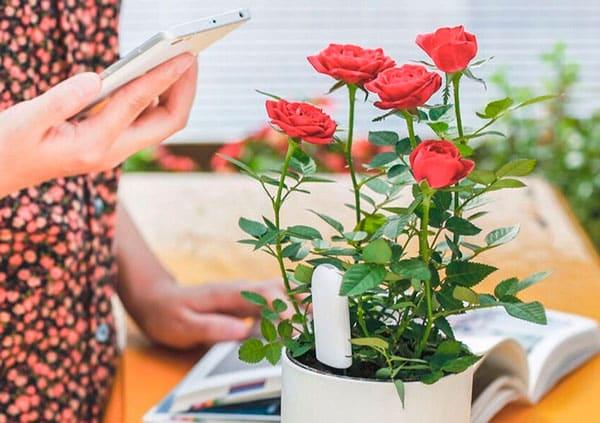 Умный датчик для цветов